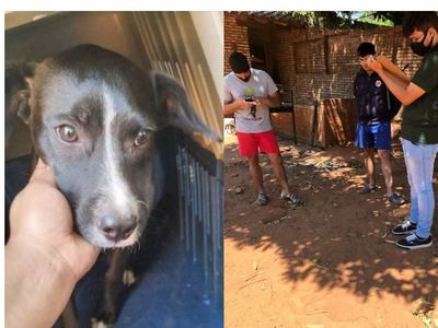 Un perrito fue rescatado tras ser brutalmente garroteado por un desgraciado