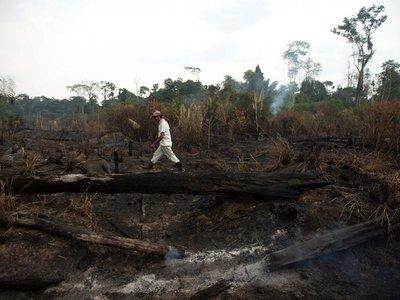 La deforestación en la Amazonía en octubre fue la mayor en 6 años