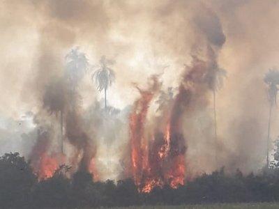 Alto Paraná: Incendio forestal consume unas 30 hectáreas de reserva
