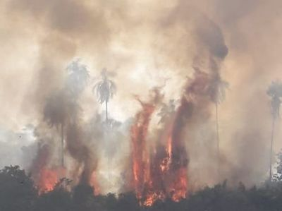 Incendio consume 20 hectáreas en franja de protección del embalse de Itaipú
