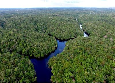 Empresa pone en marcha un proyecto de captura de carbono más grande del Chaco paraguayo