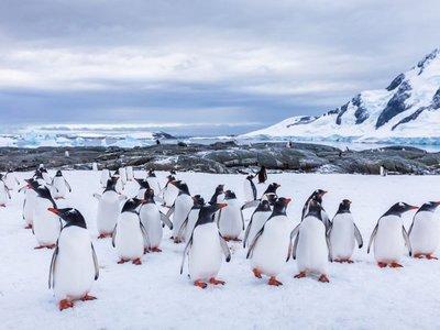 El iceberg más grande del mundo amenaza a un refugio de pingüinos
