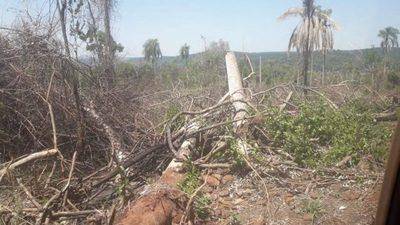 San Rafael del Paraná: denuncian quema deliberada de bosques nativos
