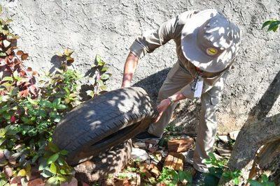 Ya se reportan 100 casos sospechosos de dengue por semana