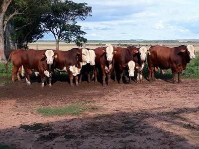 Lluvias traen alivio al sector ganadero, pero las secuelas de la sequía aún siguen vigentes