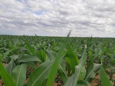 """Agricultura: """"Estamos avanzando, despacio pero estamos por buen camino"""""""