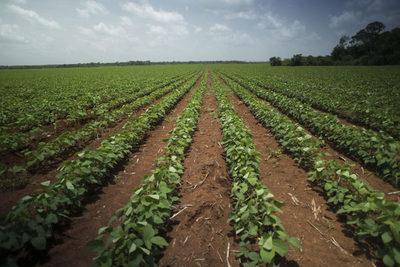 Debate abordará la importancia de la biotecnología agrícola ante la escasez de alimentos