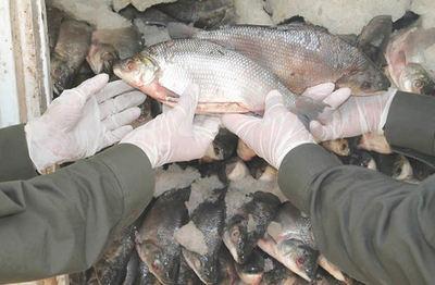 MADES ya realiza primeras intervenciones tras inicio de veda pesquera