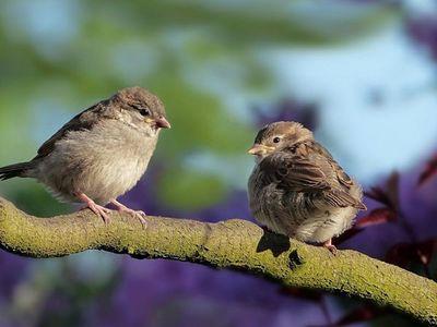 Publican el mayor catálogo genético de aves