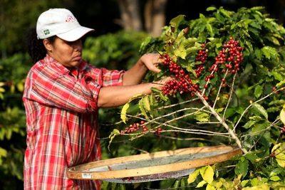 Brasil exportó en octubre un volumen récord de 4,1 millones de sacos de café