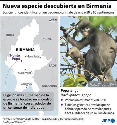 Descubren una nueva especie de primate en Birmania