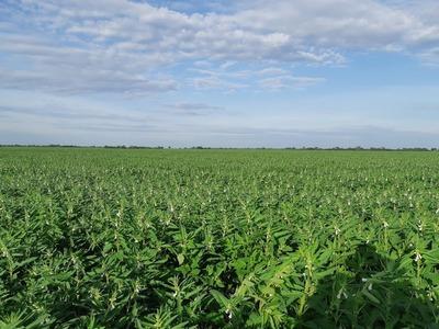 Prevén fortalecer a productores y facilitar acceso a créditos