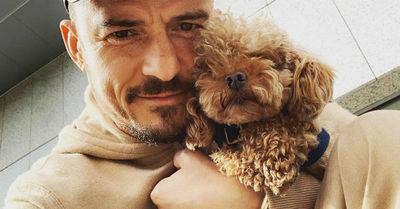 La decisión de Orlando Bloom para superar la desaparición de su perro Mighty