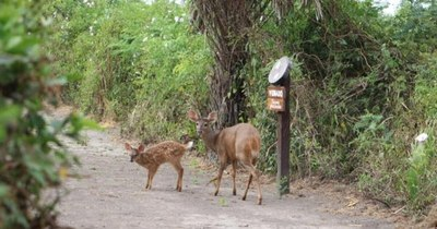 La Nación / Día del Pantanal: con exposición virtual buscan instaurar esta fecha en Paraguay