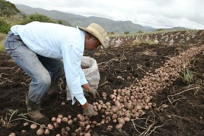Ventas de carretera, la cara de la crisis de cultivadores de papa en Colombia