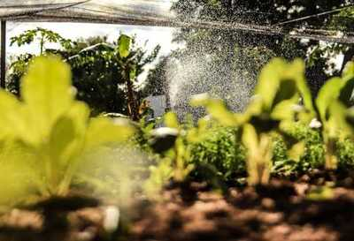 Alto Paraná: Nativos se benefician con proyecto de apoyo a la agricultura familiar