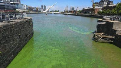 Gran cantidad de cianobacterias en las aguas del Río de la Plata
