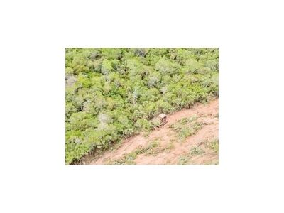 Caso omiso  a denuncias sobre deforestación
