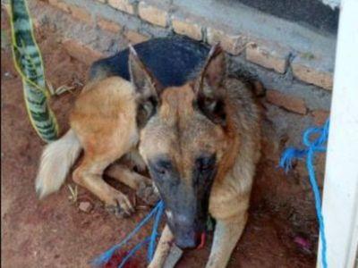 Explotaron bombas en la boca de un perro
