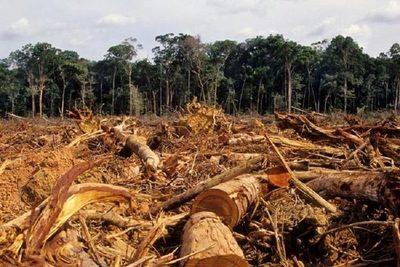 La pandemia y sus efectos sobre los recursos naturales
