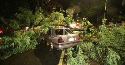 La Nación / Temporal deja árboles caídos, calles bloqueadas y daños materiales en Asunción
