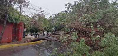 Paso de temporal deja a Asunción a oscuras y con árboles caídos