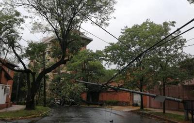 Asunción pasada por agua: Temporal arrasó con árboles y alimentadores de la ANDE