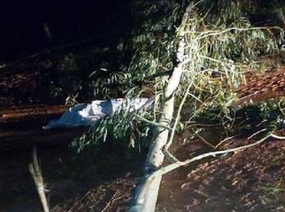 Hombre muere aplastado por un árbol en Arroyo y Esteros