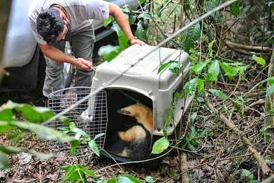 Liberan en reserva a oso melero rescatado de una casa de Presidente Franco – Diario TNPRESS