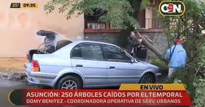 Más de 250 árboles se desplomaron en Asunción, reportan
