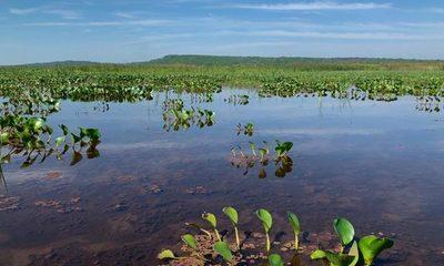Realizaron monitoreo de fauna y flora de la cuenca del Lago Ypacaraí