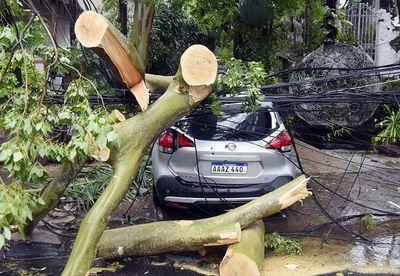 Recuerdan que seguros pueden hacerse cargo de vehículos dañados por árboles caídos