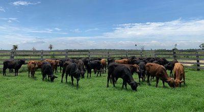 Las lluvias dan tregua a la sequía, los campos rebrotan y los ganaderos analizan el mercado