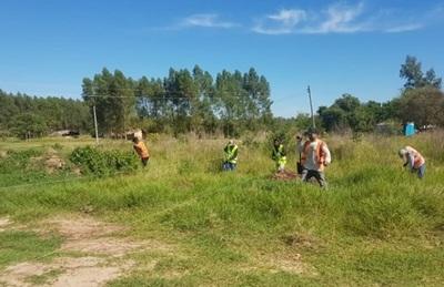 Constructora vial planta 1.000 arbolitos nativos