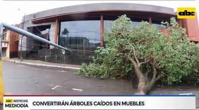 Municipalidad fabricará muebles con árboles caídos