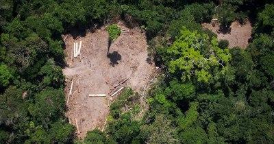 La Nación / Bolsonaro amenaza con revelar los países que compran madera amazónica ilegal