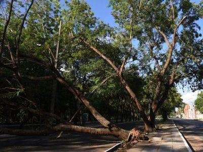 Afirman que pudo haberse evitado  50% de daños por árboles caídos