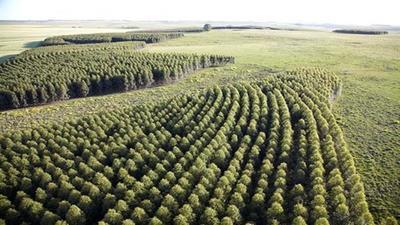 La mayor inversión privada de la historia de Paraguay será forestal, con la fábrica de celulosa más moderna en el mundo