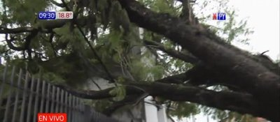 Árbol caído y columna apeligran ciudadanos en Barrio Obrero