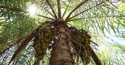 La Nación / Introducen y potencian productos paraguayos a base de coco natural a Taiwán