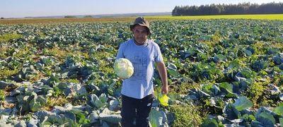 Microseguro agrícola, un aliado para los pequeños productores