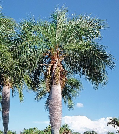 Introducen y potencian productos paraguayos a base de coco natural a Taiwán