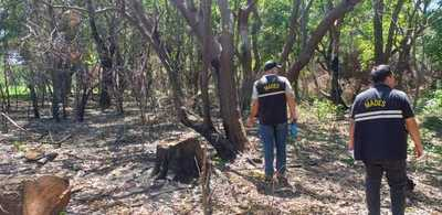 Talaban especies nativas para postes sin ningún criterio ambiental y alteraron un cauce hídrico