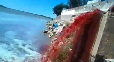 Mades suspende actividades del Frigorífico Concepción
