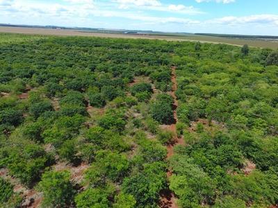 Parcela reforestada del Bosque Atlántico muestra resultados alentadores
