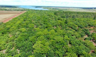 Reforestación en Tatí Yupí muestra resultados alentadores