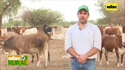 Abc Rural: Cría de ganado pese a 8 meses de sequía en el Chaco