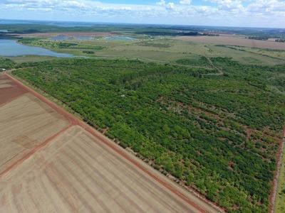 Tatí Yupí: Reforestación ya comienza a dar resultados