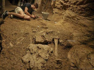 Osos de las cavernas del Paleolítico eran caníbales, según un estudio