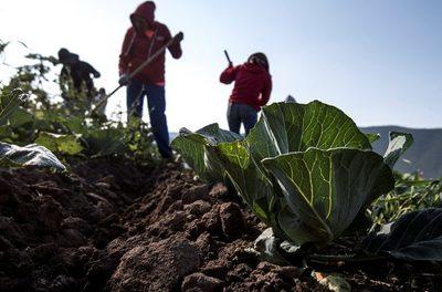 Programa de la Agencia Espacial Mexicana mejorará la productividad agrícola